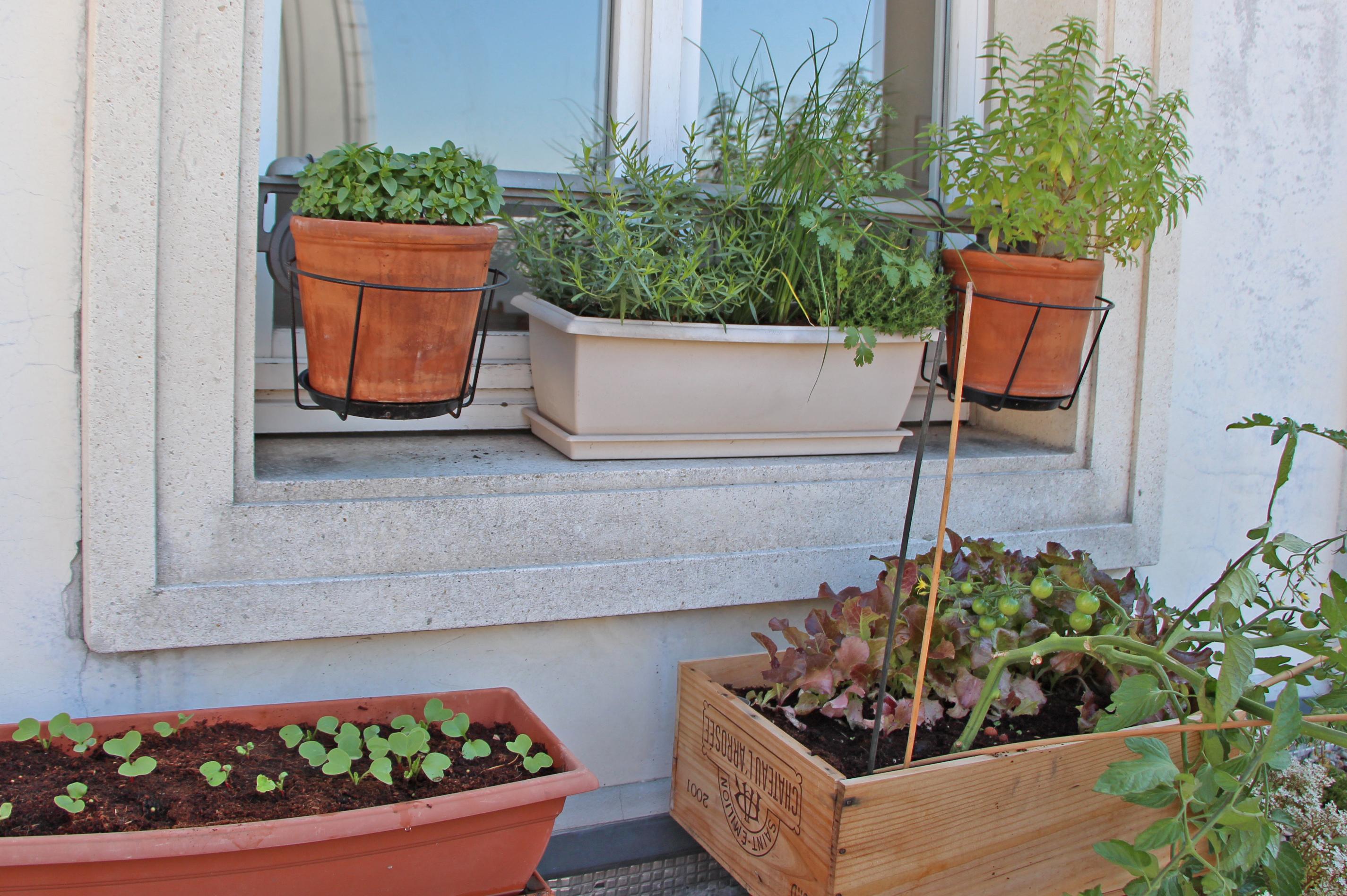 Planter Herbes Aromatiques Jardiniere des herbes au balcon : micro-agriculture urbaine à paris