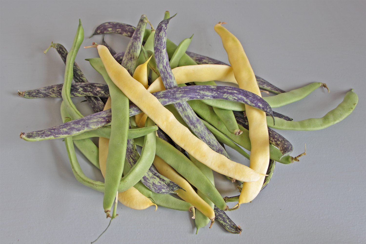 Haricot Vert Plat Haricots Plats Tricolores