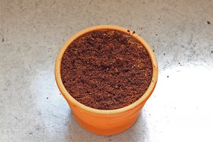 Pot rempli pour des semis