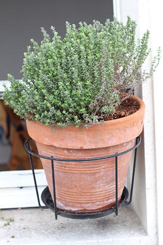 Planter des herbes aromatiques sur son balcon - Que planter sur son balcon ...