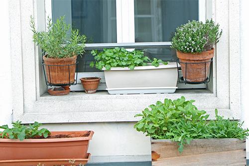 Jardin_herbes_aromatiques