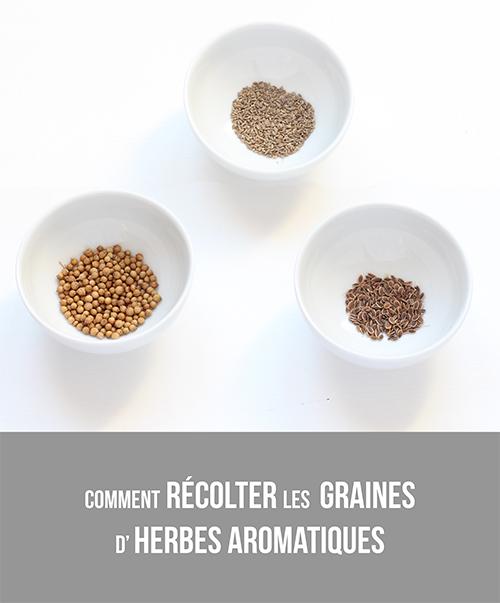 graines_aromatiques2