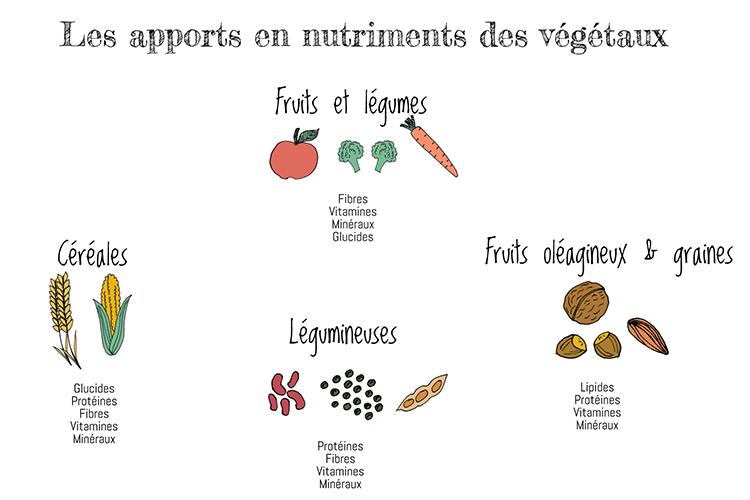 Nutriments_équilibre
