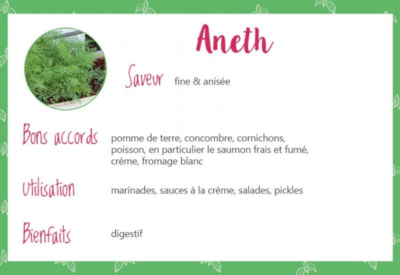 Aneth_Fiche