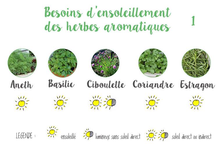 Besoin_ensoleillement_aromatiques1