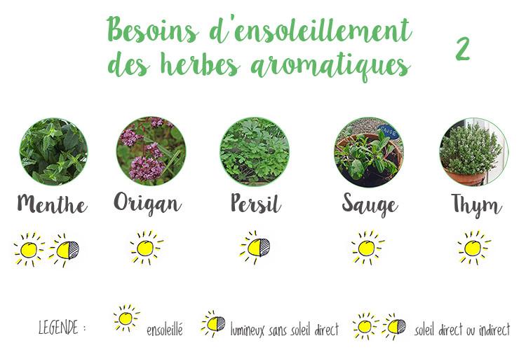 Besoin_ensoleillement_aromatiques2