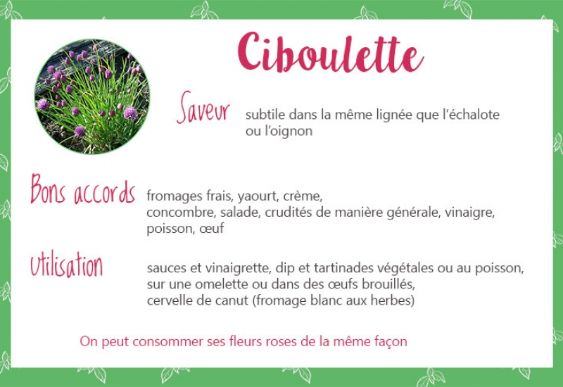 Salade herbes aromatiques youcook - Herbes aromatiques cuisine liste ...