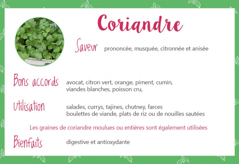 Coriandre_fiche