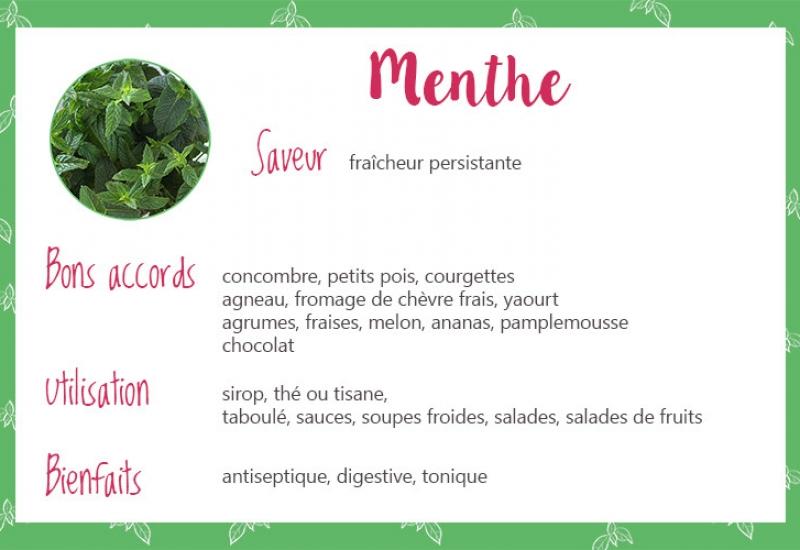 Menthe_fiche