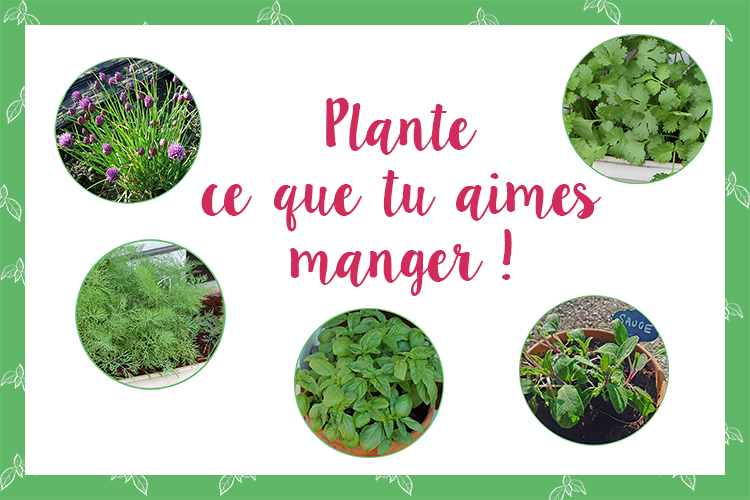 Plante_ce_que_tu_aimes