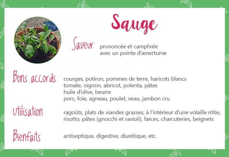 Sauge_fiche