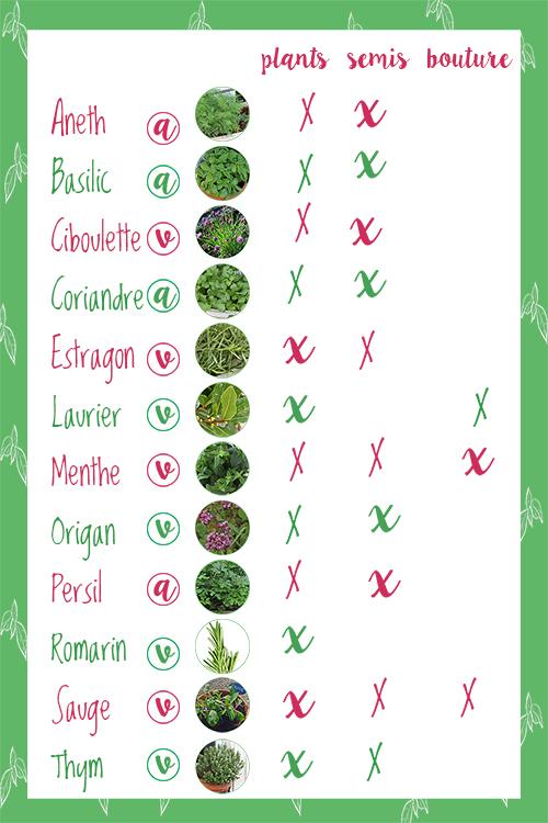Tableau_plants_semis_moyen