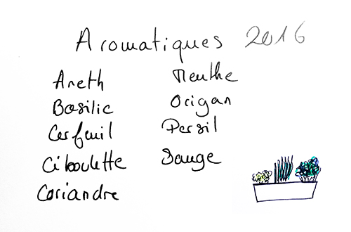 plan_jardin_herbes_aromatiques