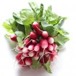botte de radis frais avec de jolies fanes