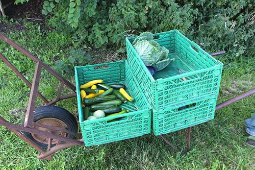 jardin-maraicher-permaculture-brouette