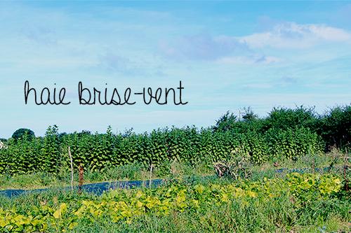 jardin-maraicher-permaculture-haie-brise-vent