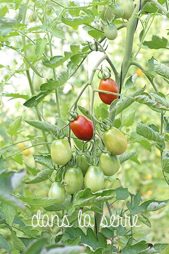 jardin-maraicher-permaculture-serre