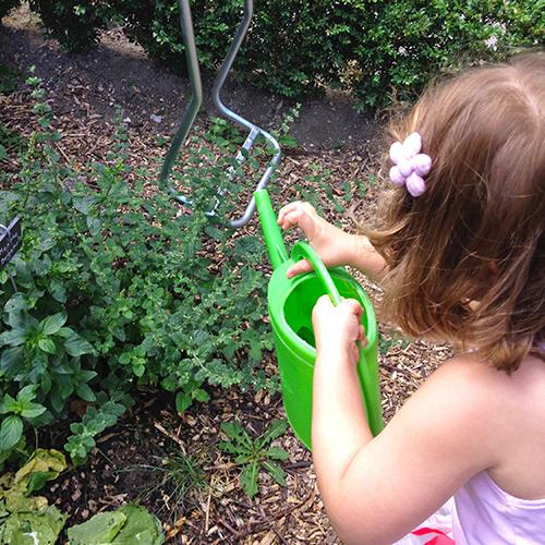 potager-urbain-musee-montmartre-paris-ateliers-jardinage-legumes-herbes-apprendre-à-cultiver-en-ville-enfants-adultes-nature-en-ville-paris-18-plein-air-été (6)