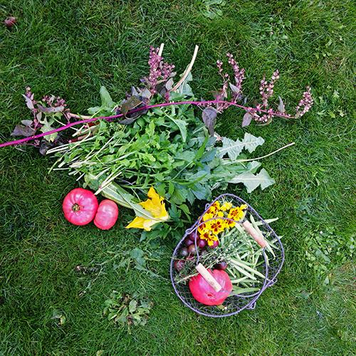 potager-urbain-musee-montmartre-paris-ateliers-jardinage-legumes-herbes-apprendre-à-cultiver-en-ville-enfants-adultes-nature-en-ville-paris-18-plein-air-automne (7)