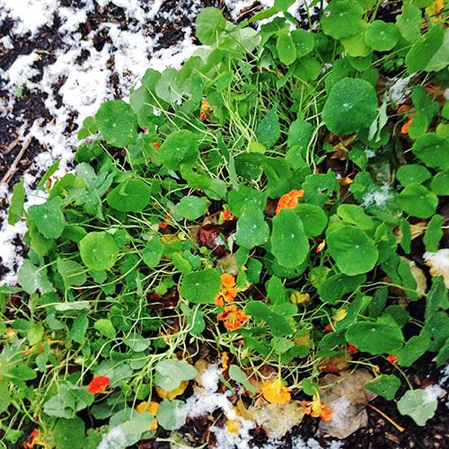 potager-urbain-musee-montmartre-paris-ateliers-jardinage-legumes-herbes-apprendre-à-cultiver-en-ville-enfants-adultes-nature-en-ville-paris-18-plein-air-hiver (1)