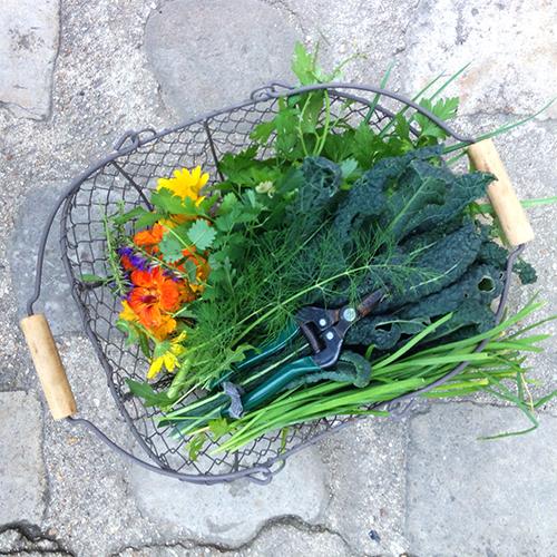 potager-urbain-musee-montmartre-paris-ateliers-jardinage-legumes-herbes-apprendre-à-cultiver-en-ville-enfants-adultes-nature-en-ville-paris-18-plein-air-hiver (3)