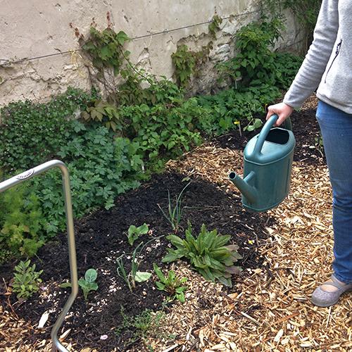 potager-urbain-musee-montmartre-paris-ateliers-jardinage-legumes-herbes-apprendre-à-cultiver-en-ville-enfants-adultes-nature-en-ville-paris-18-plein-air-printemps (1)