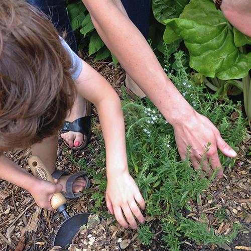 potager-urbain-musee-montmartre-paris-ateliers-jardinage-legumes-herbes-apprendre-à-cultiver-en-ville-enfants-adultes-nature-en-ville-paris-18-plein-air-printemps (2)