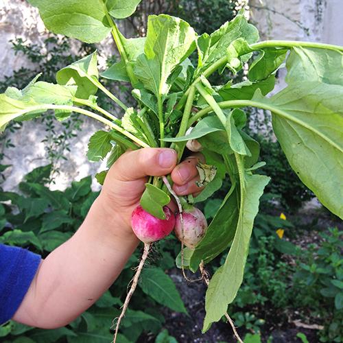 potager-urbain-musee-montmartre-paris-ateliers-jardinage-legumes-herbes-apprendre-à-cultiver-en-ville-enfants-adultes-nature-en-ville-paris-18-plein-air-printemps (5)