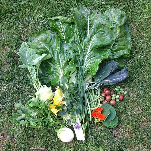 potager-urbain-musee-montmartre-paris-ateliers-jardinage-legumes-herbes-apprendre-à-cultiver-en-ville-enfants-adultes-nature-en-ville-paris-18-plein-air-été (10)
