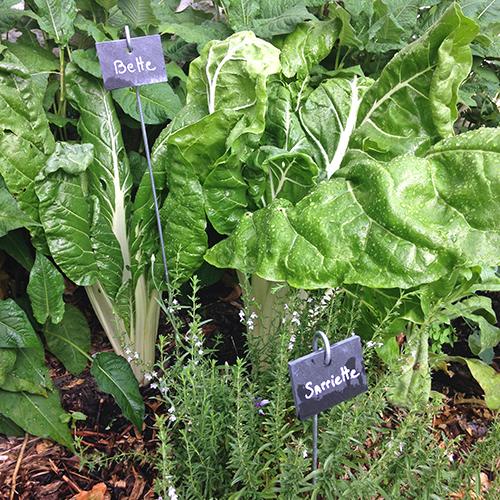 potager-urbain-musee-montmartre-paris-ateliers-jardinage-legumes-herbes-apprendre-à-cultiver-en-ville-enfants-adultes-nature-en-ville-paris-18-plein-air-été (5)