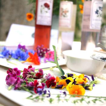 ateliers-decouverte-degustation-gastronomie-ecologie-fleurs-comestibles-2