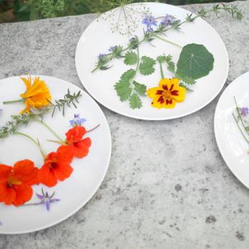 ateliers-decouverte-degustation-gastronomie-ecologie-fleurs-comestibles-4