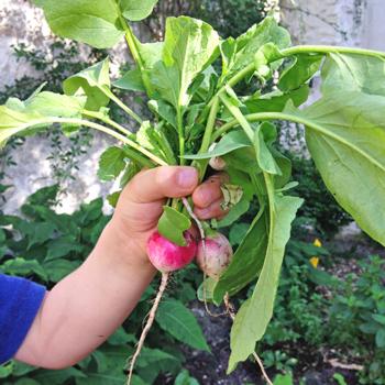 atelier-aventures-nature-scolaires-enfants-ecole-maternelle-elementaire-paris-jardin-plantes-monde-vegetal-1