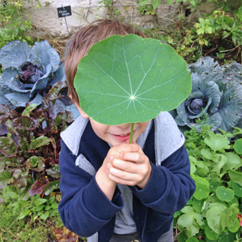 ateliers-aventures-nature-scolaire-decouverte-flore-faune-jardin-plein-air-escargot