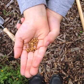 ateliers-aventures-nature-scolaire-potager-graines-jardinage-plantes-vegetaux-decouverte
