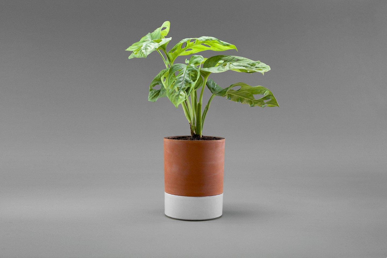 Idées cadeau pour citadins en manque de vert - Pot en terre cuite à réserve d'eau