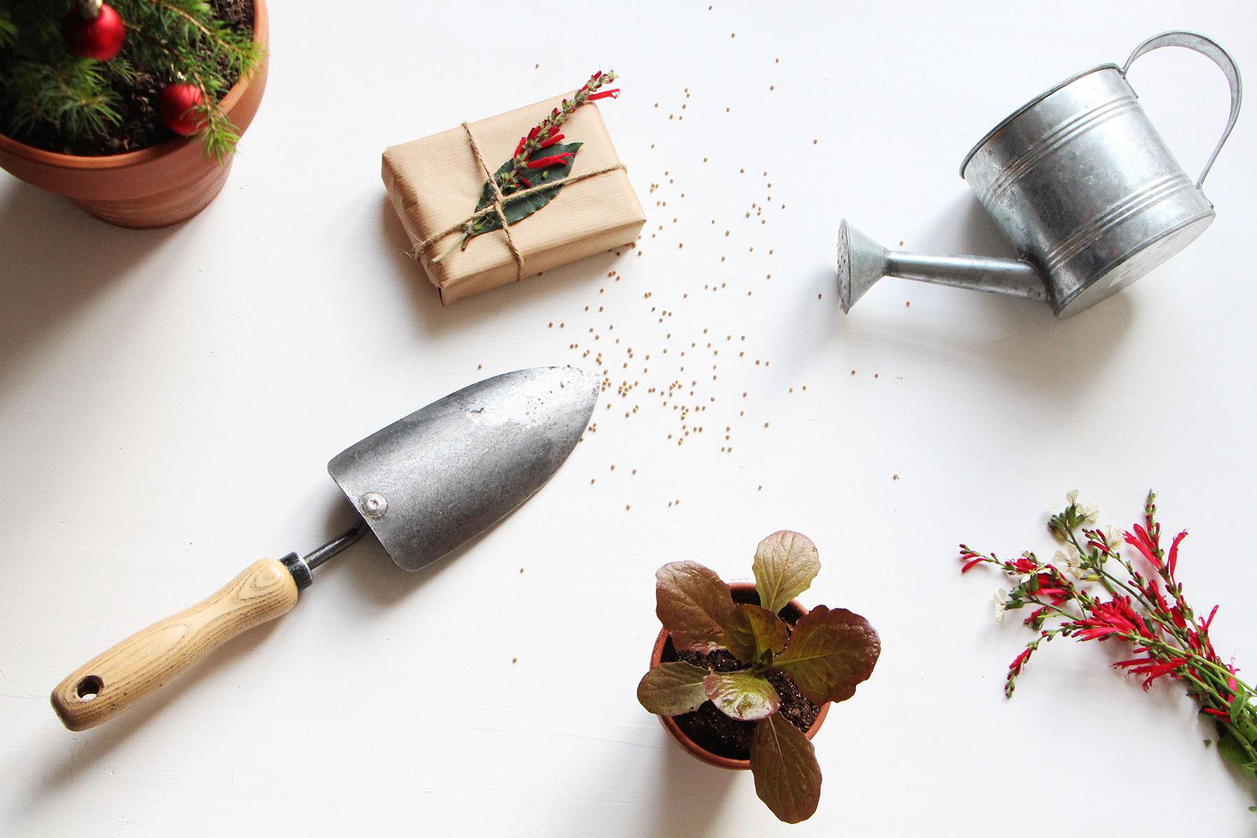 Idées Cadeaux Mettez De La Biodiversité Au Pied Du Sapin