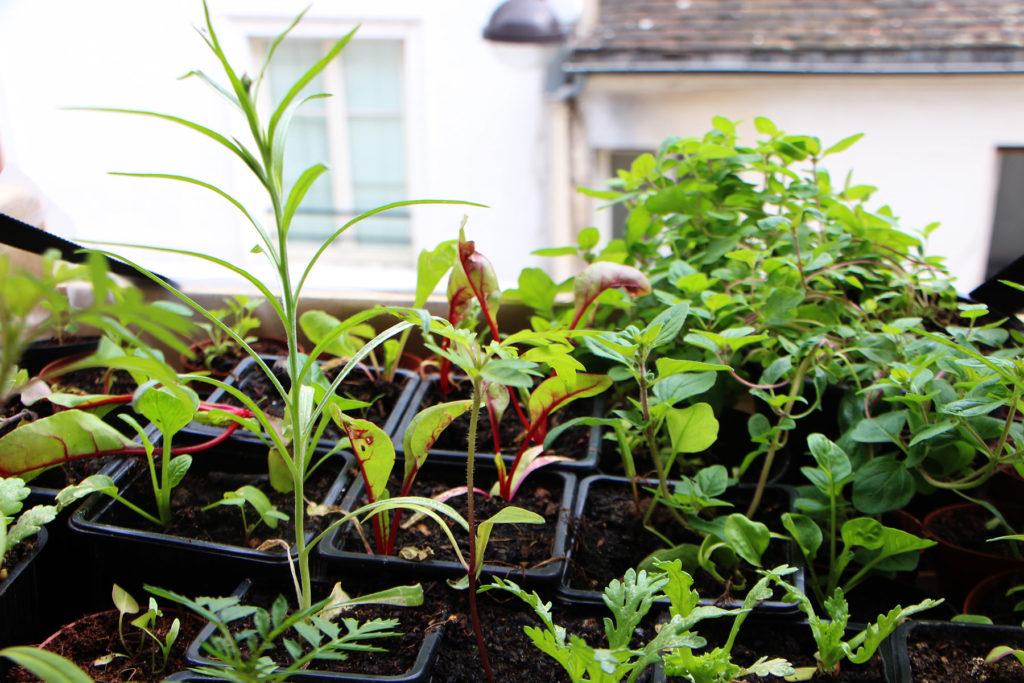 acclimater les plants à l'extérieurs