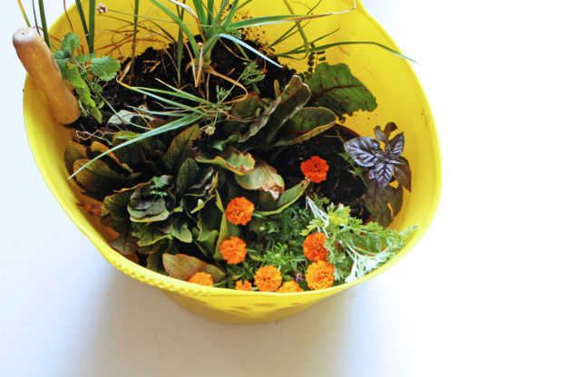 Août au potager de balcon : légumes, fleurs comestibles et aromatiques à repiquer